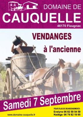 affiche vendanges à l'ancienne au Domaine de Cauquelle